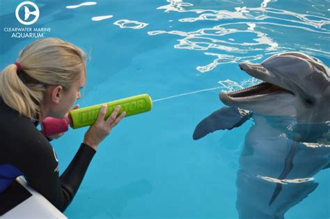 51 best images about Hope the Dolphin on Pinterest | Swim