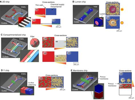 Metastasis in context: modeling the tumor microenvironment
