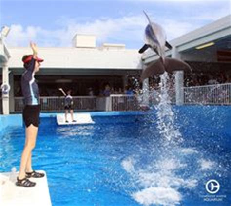 Come visit Clearwater Marine Aquarium to see Hope in
