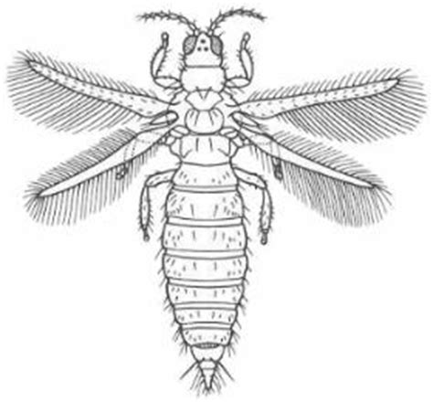 4-H Virtual Insect Collection