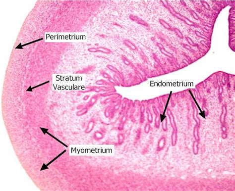 Female Reproductive System - Biology 4000 with Kempf at